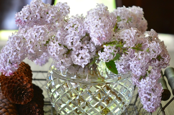 Lilacs in captivity