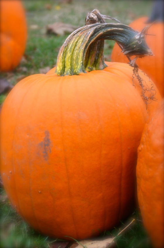 Pumpkins with great stems